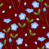 Blauwe de Ogenbloem van de Nemophilababy Vector illustratie op rode achtergrond Royalty-vrije Stock Afbeelding