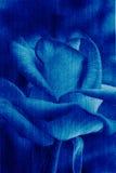 Blauwe de schoonheid nam, abstracte de bloemachtergrond van de jeanstextuur toe Royalty-vrije Stock Foto