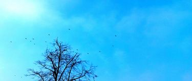 Blauwe de vogelsboom van de hemelvrijheid stock afbeeldingen