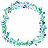 Blauwe de waterverfillustratie van de Vergeet-mij-nietjekroon De lentebloem Forgetmenot op witte achtergrond vector illustratie