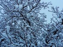 Blauwe de winterochtend in December stock foto