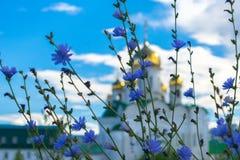 Blauwe de zomerbloemen op de achtergrond van een vage kerk Stock Foto