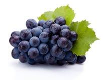 Blauwe die druiven nat met bladeren op witte achtergrond worden geïsoleerd royalty-vrije stock foto's