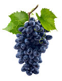 Blauwe die druivenbos op witte achtergrond wordt geïsoleerd Royalty-vrije Stock Foto