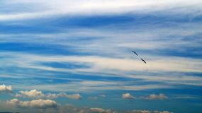 Blauwe die hemel met witte wolken tijdens de vlucht wordt gestippeld, en twee raven Royalty-vrije Stock Afbeelding