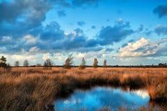 Blauwe die hemel in moeraswater wordt weerspiegeld Royalty-vrije Stock Foto's