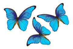 Blauwe die Morpho-vlinders op witte achtergrond worden geïsoleerd Stock Foto's
