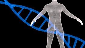 Blauwe DNA en menselijke wireframe Stock Foto