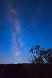 Blauwe donkere nachthemel met vele sterren boven gebied van bomen Royalty-vrije Stock Foto