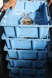 Zeevruchten voor vissenveiling Royalty-vrije Stock Afbeeldingen