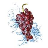 Blauwe druif met geïsoleerdeu waterplons Stock Foto's