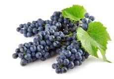 Blauwe druif met groen bladeren geïsoleerde fruit royalty-vrije stock fotografie