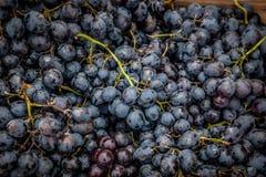 Blauwe druiven Royalty-vrije Stock Afbeelding