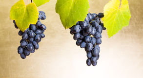 Blauwe druivenclusters op wit stock foto's