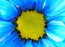 Blauwe en Gele Bloem Royalty-vrije Stock Foto's
