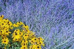 Blauwe en gele bloemen Royalty-vrije Stock Foto