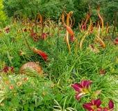 Blauwe en groene tuin van glas en het leven installaties Royalty-vrije Stock Foto