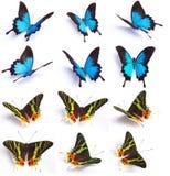 Blauwe en kleurrijke vlinder op witte achtergrond Royalty-vrije Stock Afbeeldingen