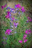 Blauwe en purpere bloemen stock foto