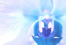 Blauwe en Purpere Orchidee stock afbeelding