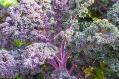 Blauwe en purpere organische groente Stock Afbeeldingen