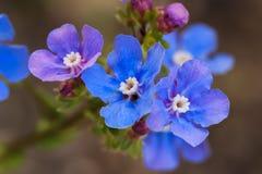 Blauwe en purpere wildflowers Stock Afbeelding