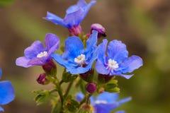 Blauwe en purpere wildflowers Royalty-vrije Stock Fotografie