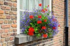 Blauwe en rode bloeiende installaties in de vensterbank stock afbeeldingen