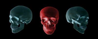 Blauwe en rode schedels Royalty-vrije Stock Afbeelding