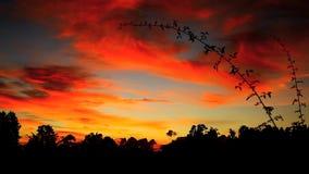 Blauwe en Rode Zonsondergang stock videobeelden