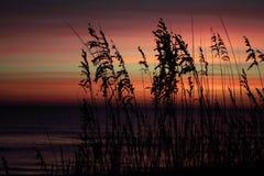Blauwe en roze zonsopgang Stock Foto's