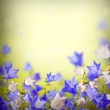 Blauwe en witte bellflowers background_3 Royalty-vrije Stock Foto's
