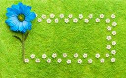 Blauwe en witte bloemen op groene achtergrond Het bloeien concept Royalty-vrije Stock Fotografie