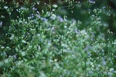 Blauwe en witte bloemenbloei royalty-vrije stock afbeeldingen
