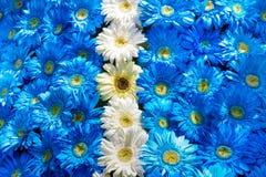 Blauwe en witte bloemendecoratie Stock Afbeeldingen