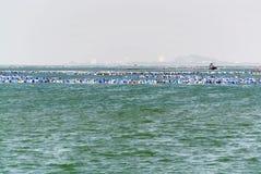 Blauwe en Witte Boeien die in het Overzees drijven stock afbeeldingen