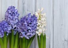 Blauwe en Witte Hyacinten Stock Afbeeldingen