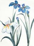 Blauwe en witte irisbloemen stock illustratie