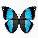 Blauwe en zwarte vlinder Stock Foto's