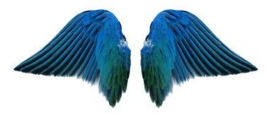 Blauwe engelenvleugel stock afbeelding