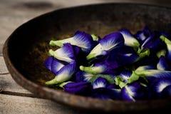 Blauwe erwtenbloemen Stock Afbeeldingen