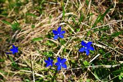 Blauwe fijnheid stock fotografie