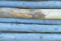 Blauwe gekleurde boomstompen Stock Foto