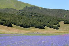 Blauwe gekleurde gebieden met korenbloemen Royalty-vrije Stock Foto's