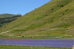 Blauwe gekleurde gebieden met korenbloemen Royalty-vrije Stock Afbeeldingen