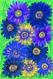 Blauwe gerbera Stock Afbeeldingen