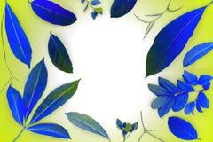 Blauwe gestemde bladeren op vlakke achtergrond De gekleurde foto van de blad hoogste mening Het tropische kader van het bomengebl Stock Foto