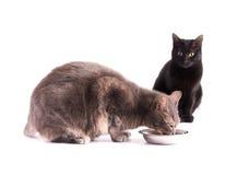 Blauwe gestreepte katkat die van een zilveren kom eten Stock Fotografie