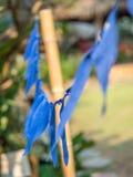 Blauwe geverfte zijdebunting Luang Phabang, Laos stock afbeeldingen