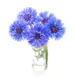 Blauwe graanbloem Bloemboeket op wit stock fotografie